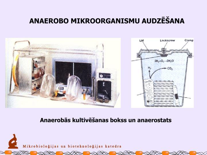 ANAEROBO MIKROORGANISMU AUDZĒŠANA