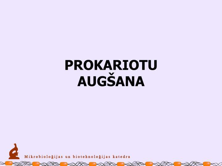 PROKARIOTU AUGŠANA