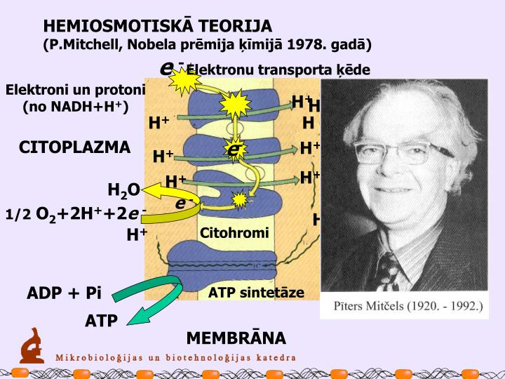 HEMIOSMOTISKĀ TEORIJA
