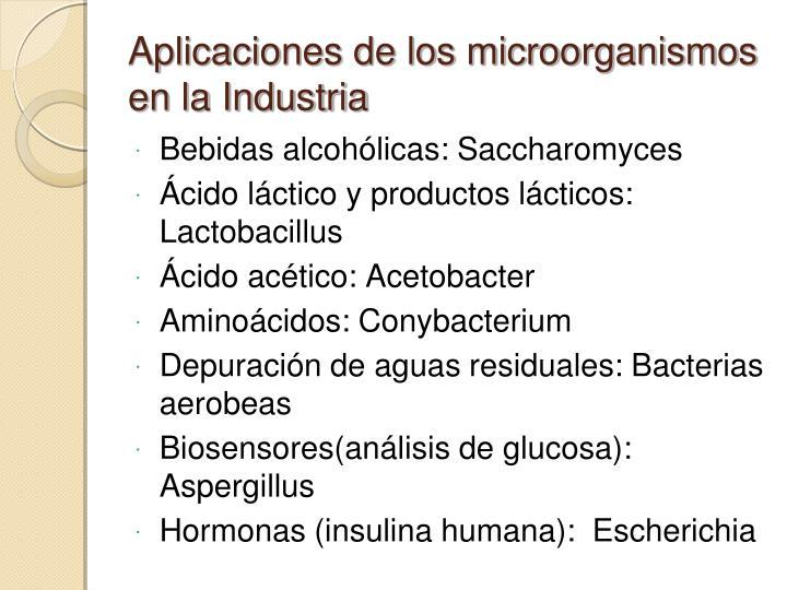 Bebidas alcohólicas: Saccharomyces