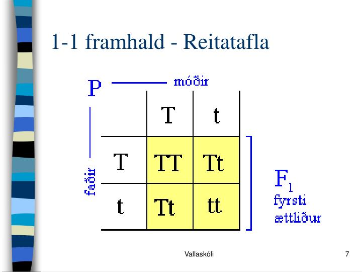 1-1 framhald - Reitatafla