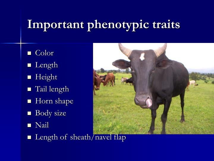 Important phenotypic traits