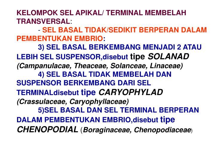 KELOMPOK SEL APIKAL/ TERMINAL MEMBELAH TRANSVERSAL