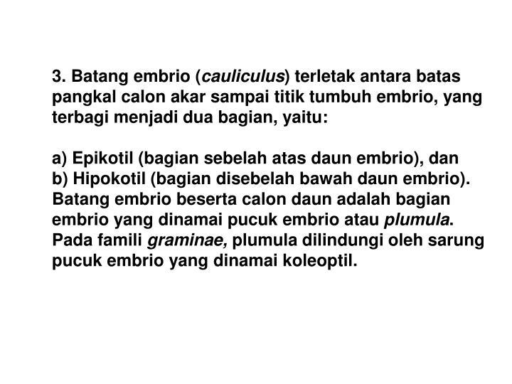 3. Batang embrio (