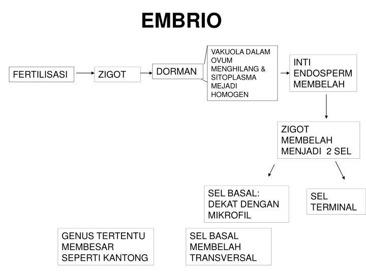 EMBRIO