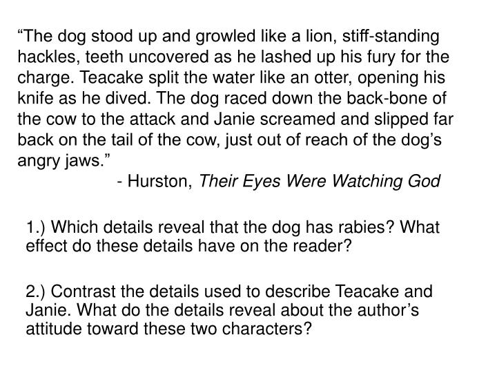 """""""The dog stood up and growled like a lion, stiff-standing hackles, teeth uncovered as he lashed up his fury for the charge. Teacake split the water like an otter, opening his knife as he dived. The dog raced down the back-bone of the cow to the attack and Janie screamed and slipped far back on the tail of the cow, just out of reach of the dog's angry jaws."""""""