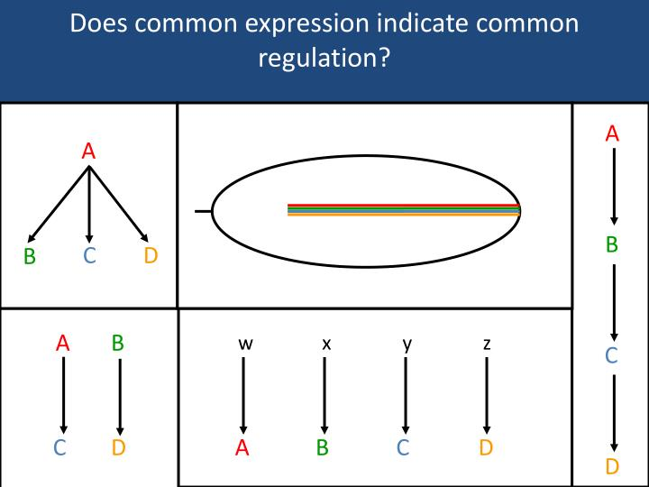 Does common expression indicate common regulation?