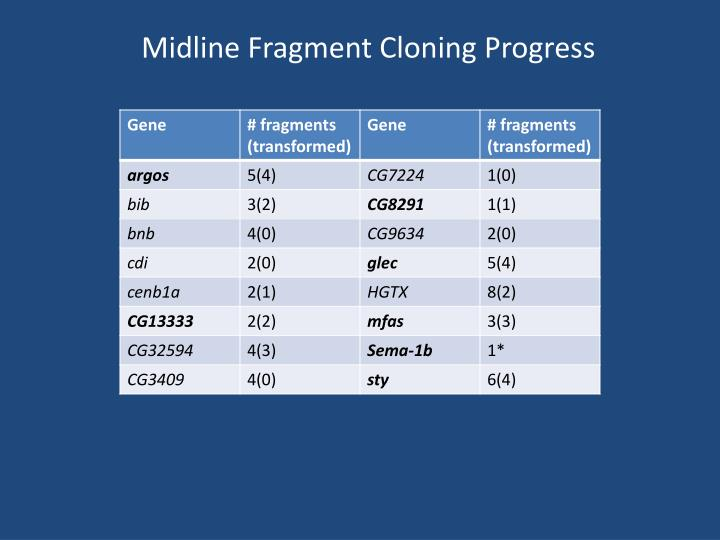Midline Fragment Cloning Progress