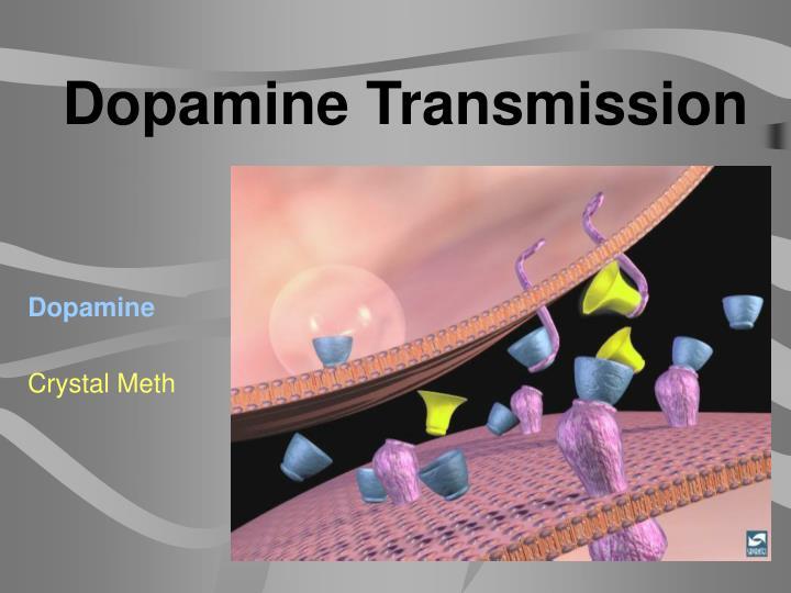 Dopamine Transmission