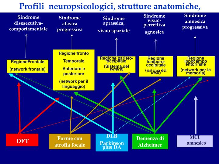 Profili  neuropsicologici, strutture anatomiche,