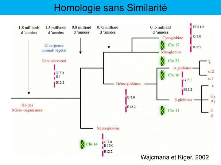 Homologie sans Similarité