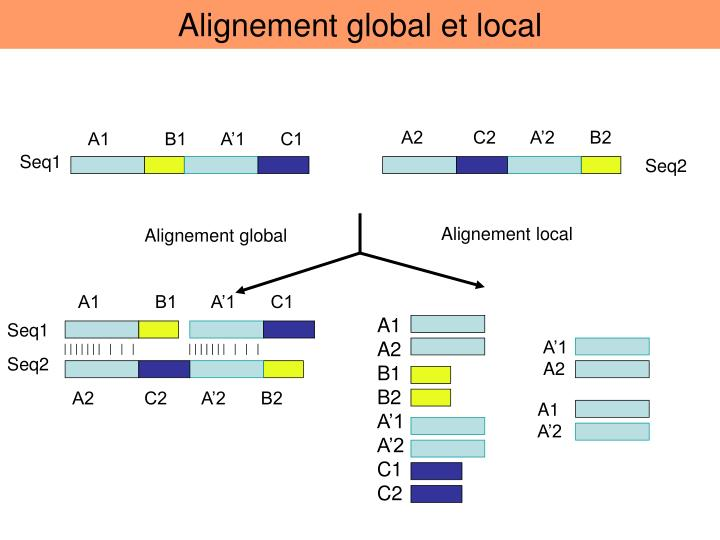 Alignement global et local
