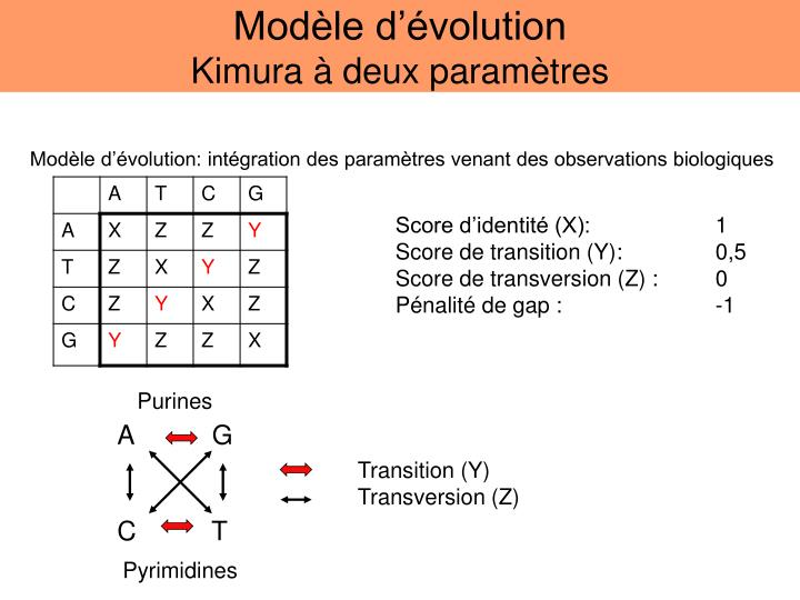 Modèle d'évolution