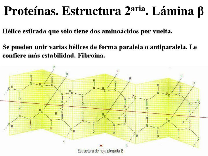Proteínas. Estructura 2