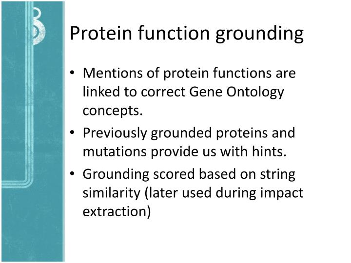Protein function grounding