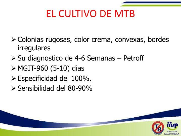 EL CULTIVO DE MTB