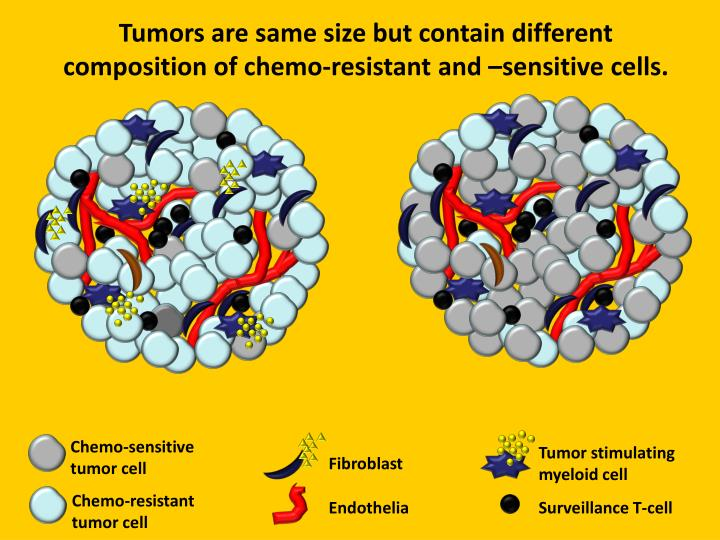 Tumors are same size but contain different composition of chemo-resistant and –sensitive cells.
