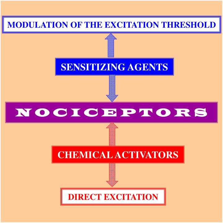 MODULATION OF THE EXCITATION THRESHOLD