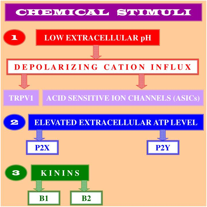 CHEMICAL   STIMULI