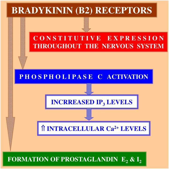 BRADYKININ (B2) RECEPTORS
