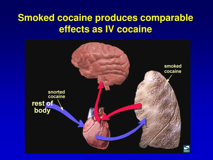 Smoked cocaine produces comparable effects as IV cocaine