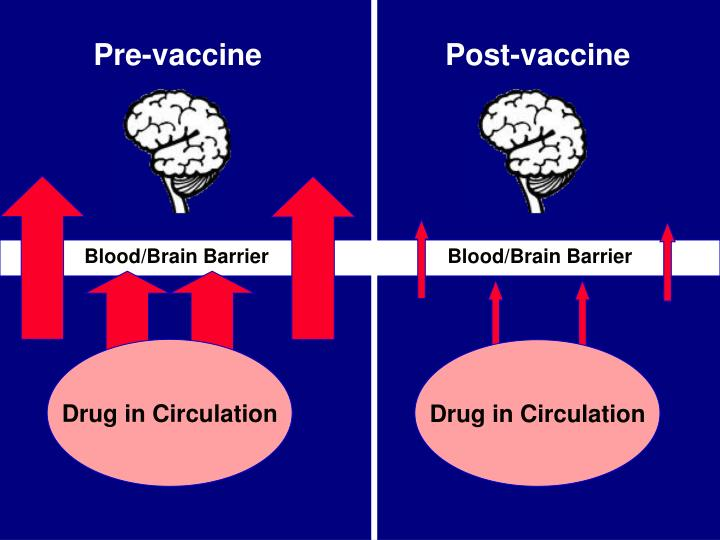 Blood/Brain Barrier