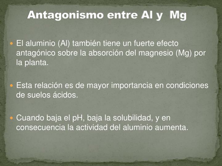 Antagonismo entre Al y  Mg