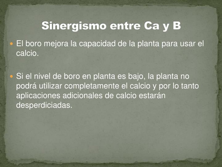 Sinergismo entre Ca y B