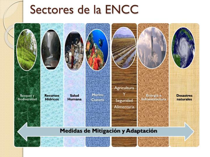 Sectores de la ENCC