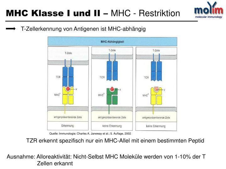 T-Zellerkennung von Antigenen ist MHC-abhängig