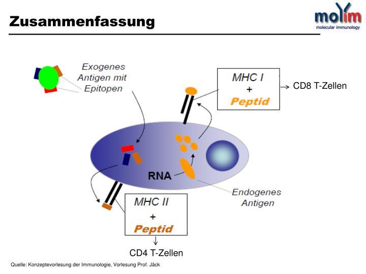 CD8 T-Zellen