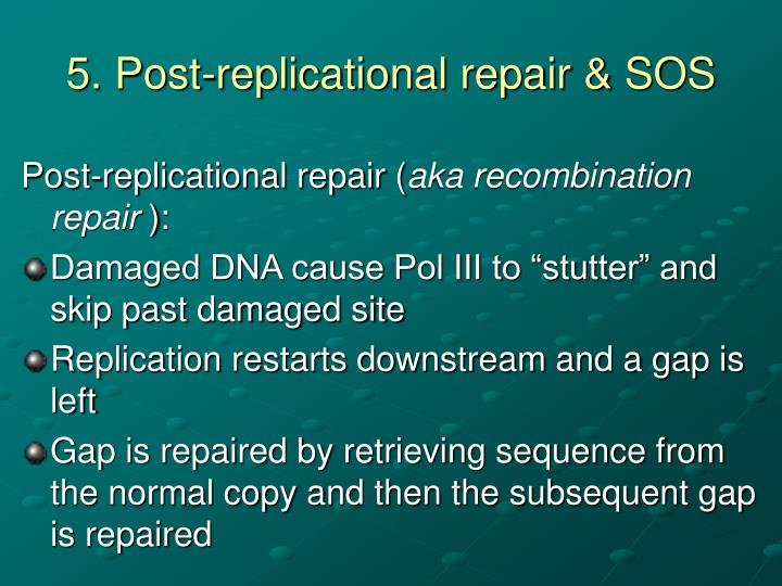 5. Post-replicational repair & SOS