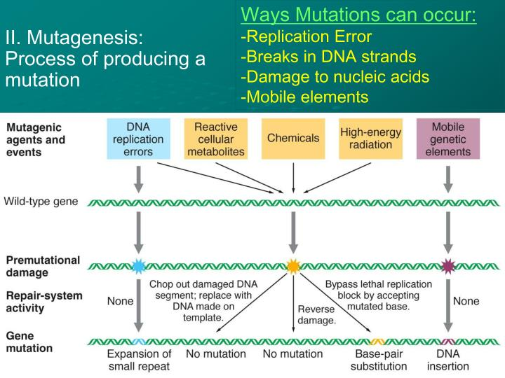 Ways Mutations can occur: