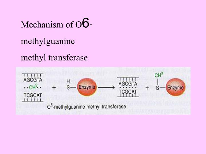 Mechanism of O6-methylguanine