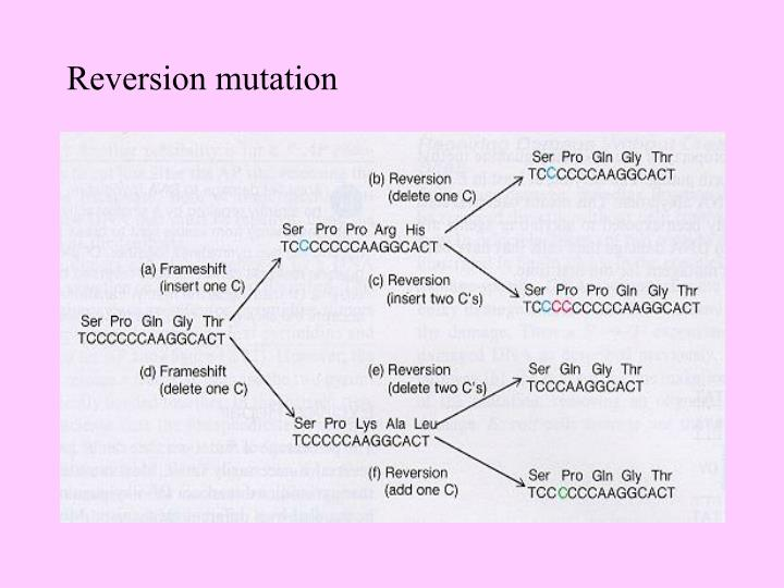 Reversion mutation