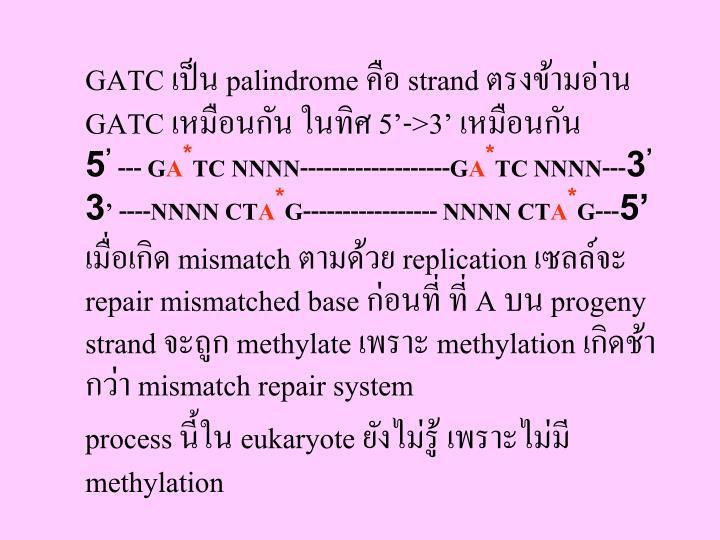 GATC เป็น palindrome คือ