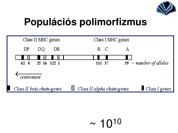 Populációs polimorfizmus
