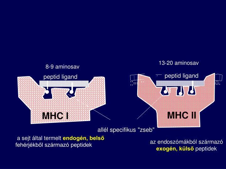 13-20 aminosav
