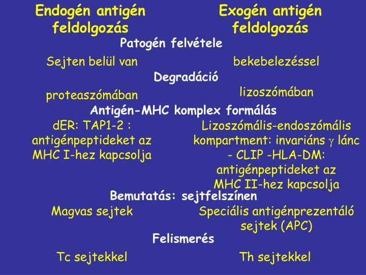 Endogén antigén feldolgozás