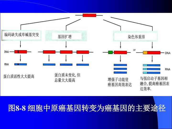 图8-8 细胞中原癌基因转变为癌基因的主要途径