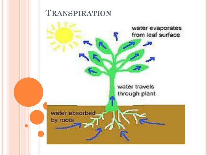 PPT - Lesson #6: Transpiration PowerPoint Presentation ...