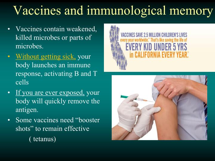 Vaccines and immunological memory