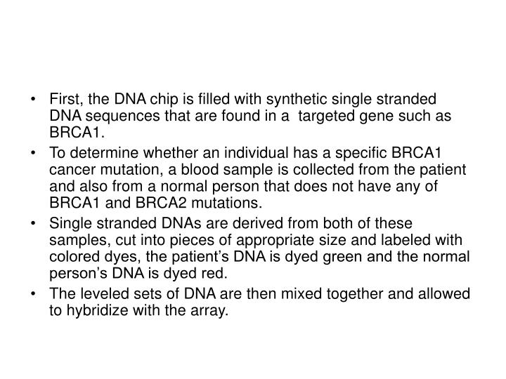 First, the DNA chip is filled with synthetic single stranded DNA sequences that are found in a  targeted gene such as BRCA1.