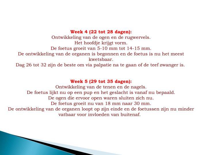 Week 4 (22 tot 28 dagen):