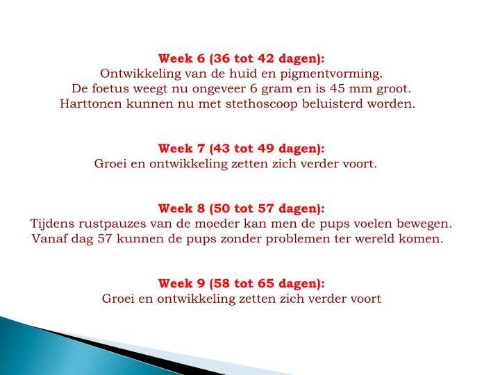 Week 6 (36 tot 42 dagen):