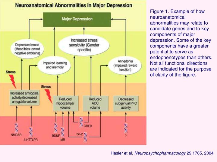 Figure 1. Example of how neuroanatomical abnormalities may relate to candidate genes and to key components of major depression. Some of the key components have a greater potential to serve as endophenotypes than others. Not all functional directions are indicated for the purpose of clarity of the figure.