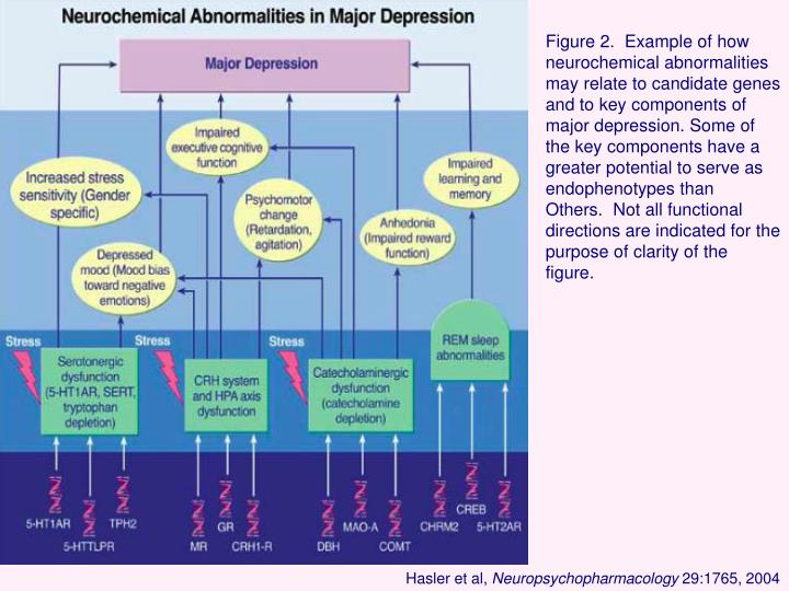 Figure 2.  Example of how neurochemical abnormalities may relate to candidate genes and to key components of major depression. Some of the key components have a greater potential to serve as endophenotypes than