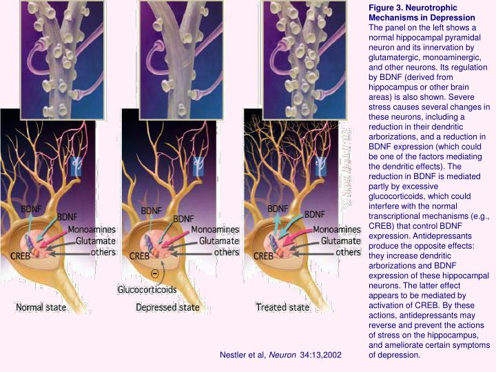 Figure 3. Neurotrophic Mechanisms in Depression