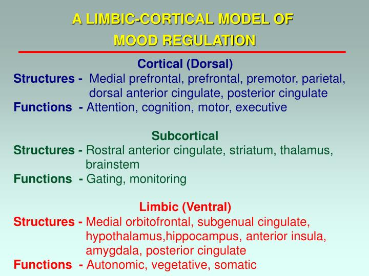 A LIMBIC-CORTICAL MODEL OF