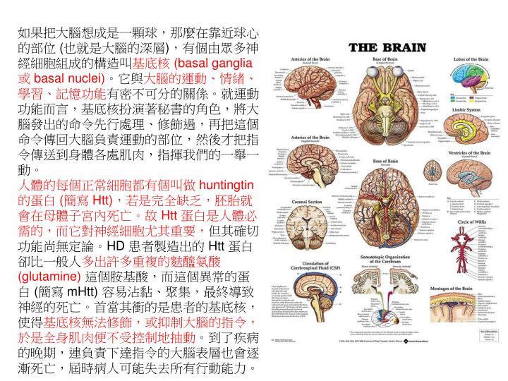如果把大腦想成是一顆球,那麼在靠近球心的部位 (也就是大腦的深層),有個由眾多神經細胞組成的構造叫